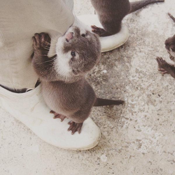 Human Has an Otter on Each Foot