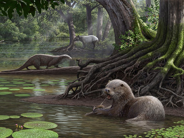 Scientists Discover Prehistoric Fossils of New, Huge Otter Species