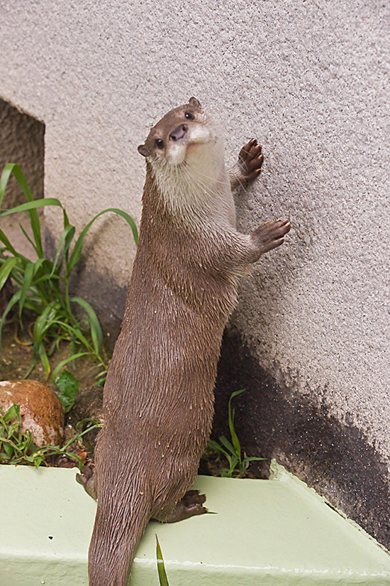 Otter Is Very Effective as a Wall Salesotter