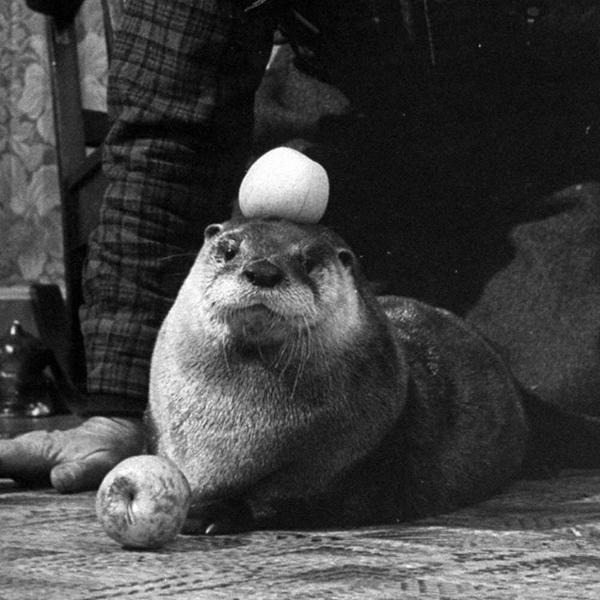 Otter Is So Good at Balancing Things