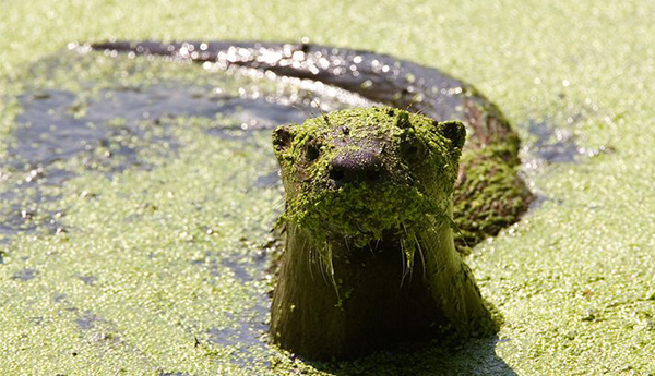 Otter, You're Going to Need a Bath After This... Bath