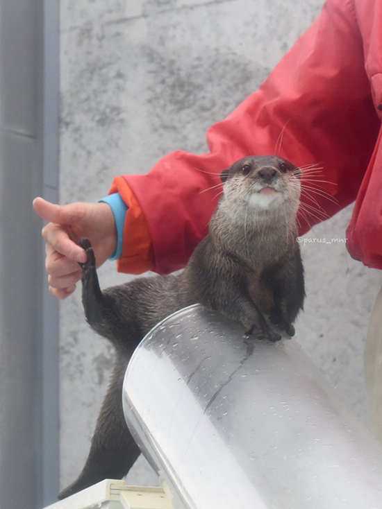 Otter's Super-Casual High Five