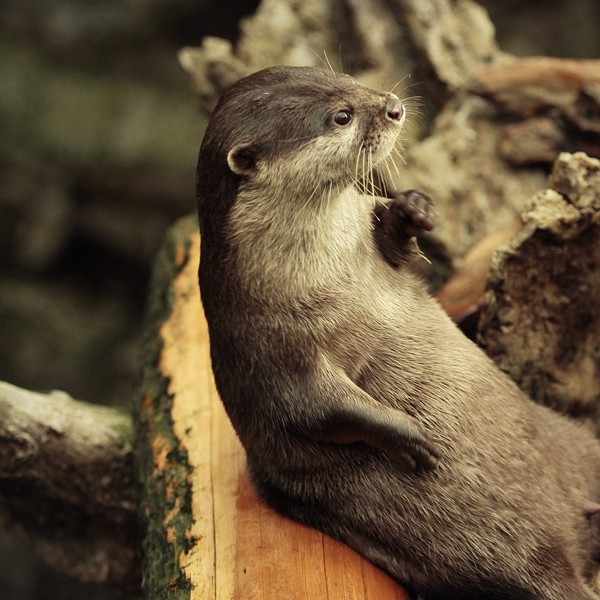 Casual Otter Is Casual