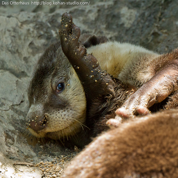 Overly Dramatic Otter Hopes We Fell for His Act 2