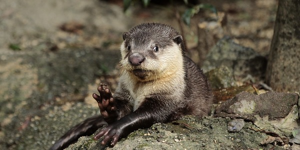 Surprised Otter Quickly Recovers and Waves 2