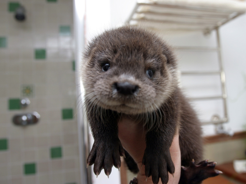 Otter Pup Is a Handful