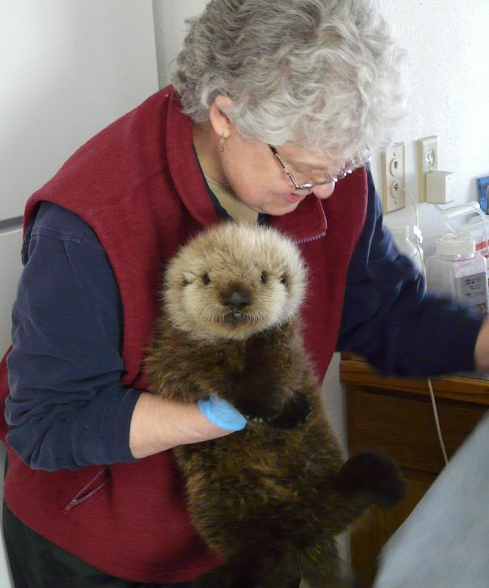 Otter Pup Has a Vet Appointment