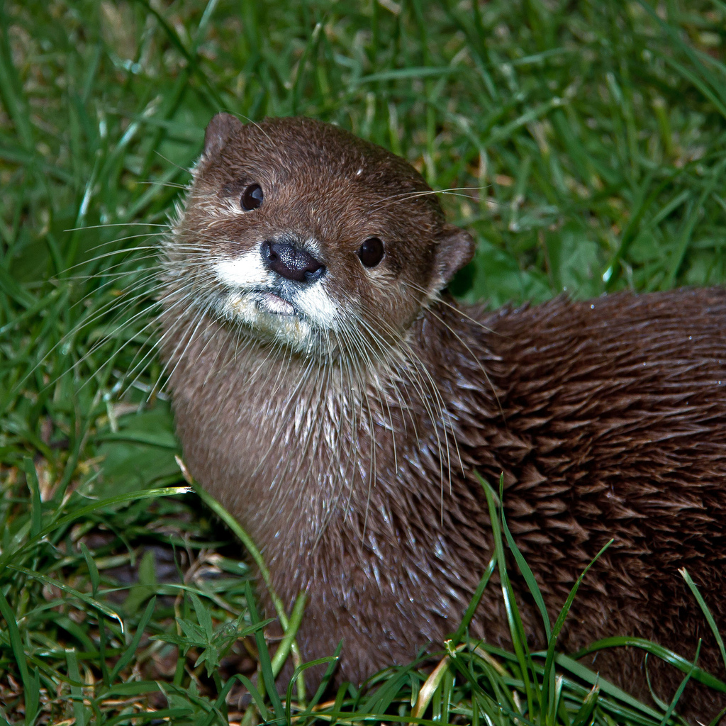 Otter Tilts His Head for Maximum Cuteness