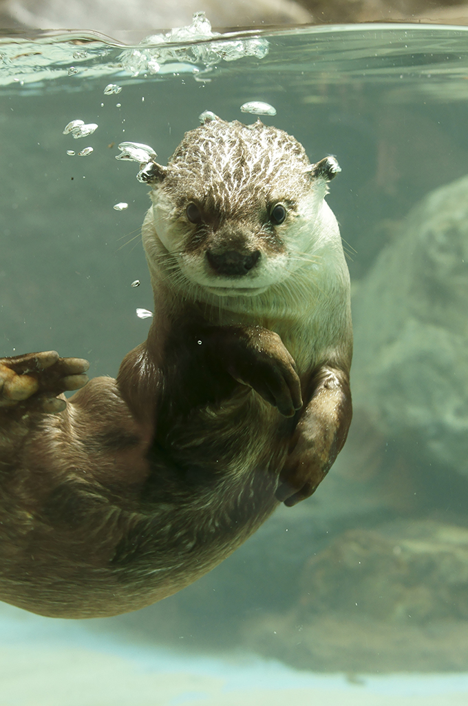 Esther Williams Has Nothing on Otter