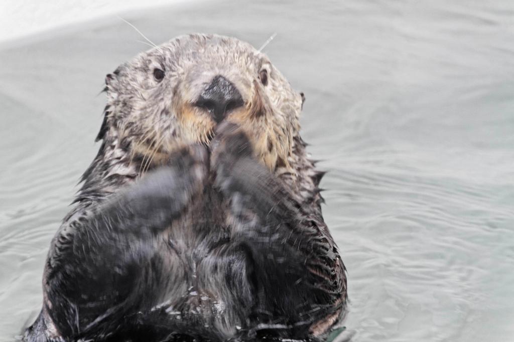 Otter Let a Secret Slip