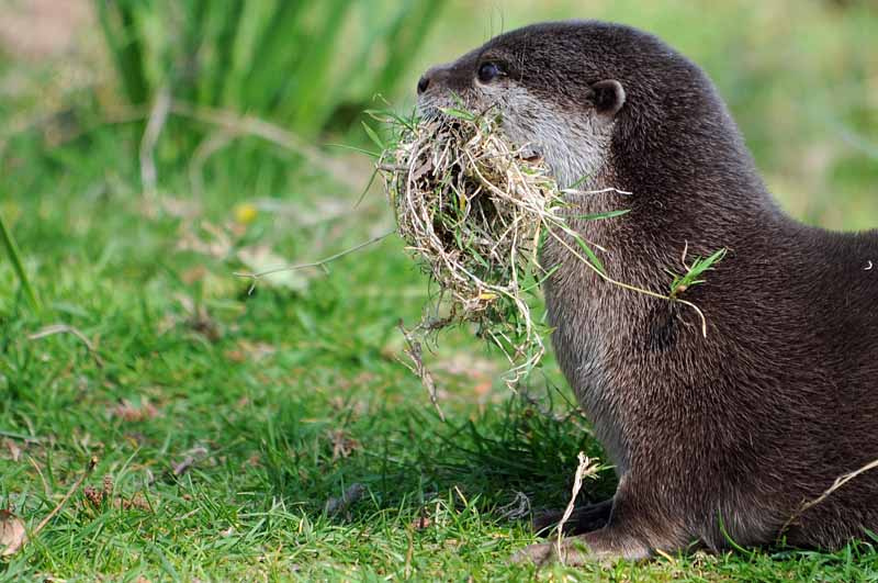 Otter Is a Gatherer