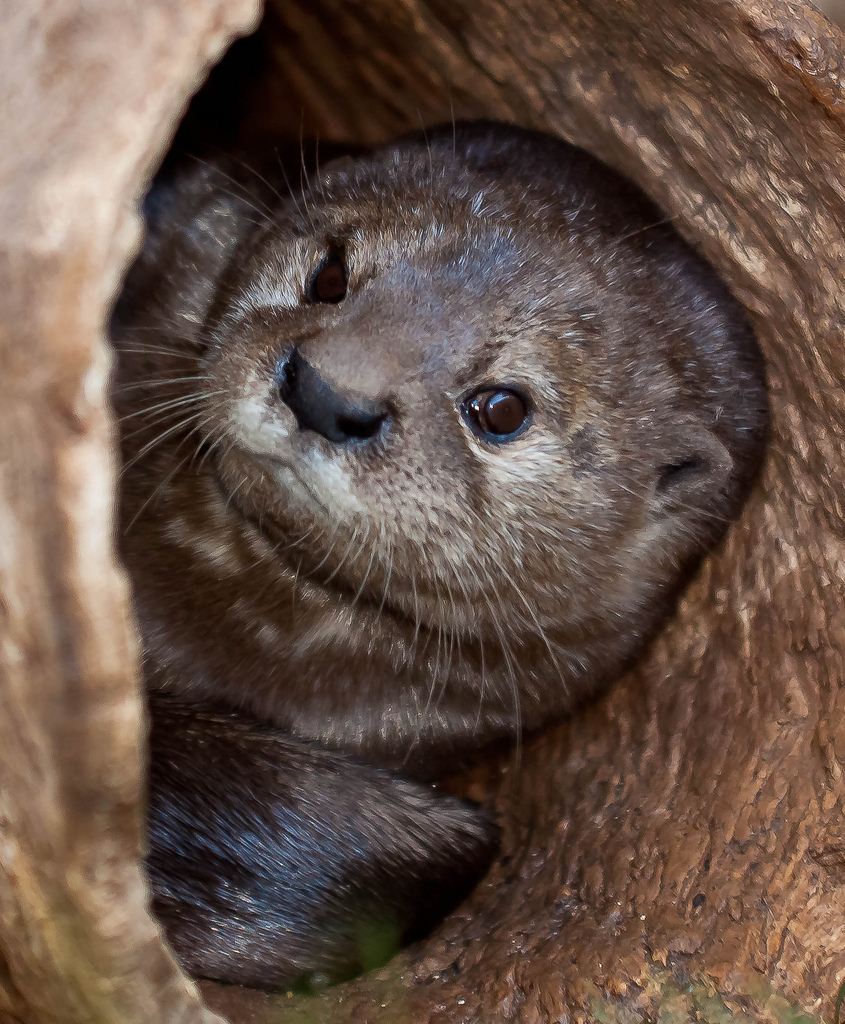 You've Found Otter in Your Game of Hide and Go Seek!