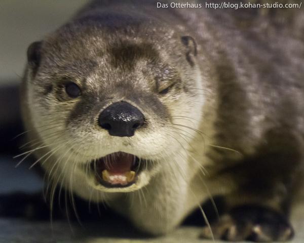 Flirting Otter Winks at You