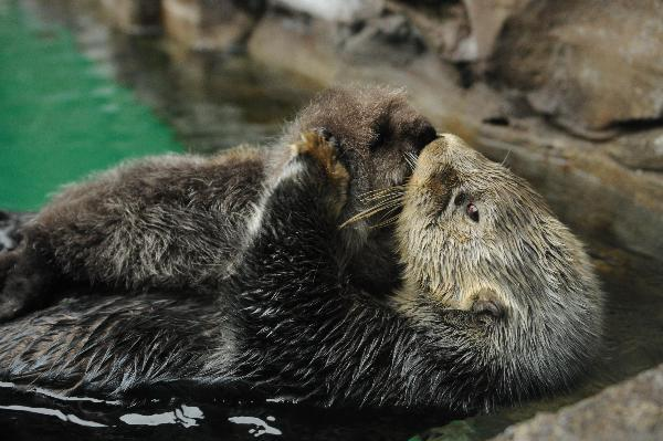 Photographer Has Caught Otter's Attention 2