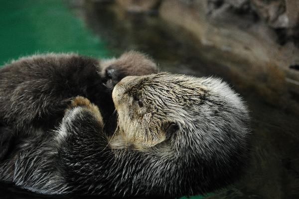Photographer Has Caught Otter's Attention 3