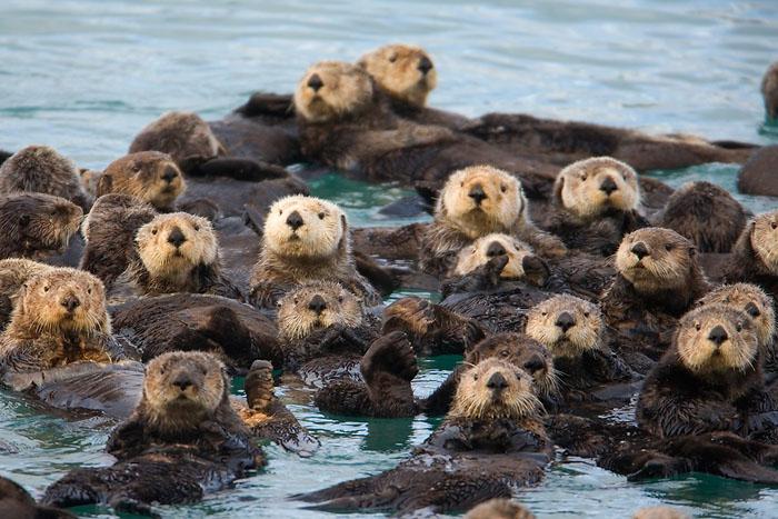 Fuzzy Raft Party