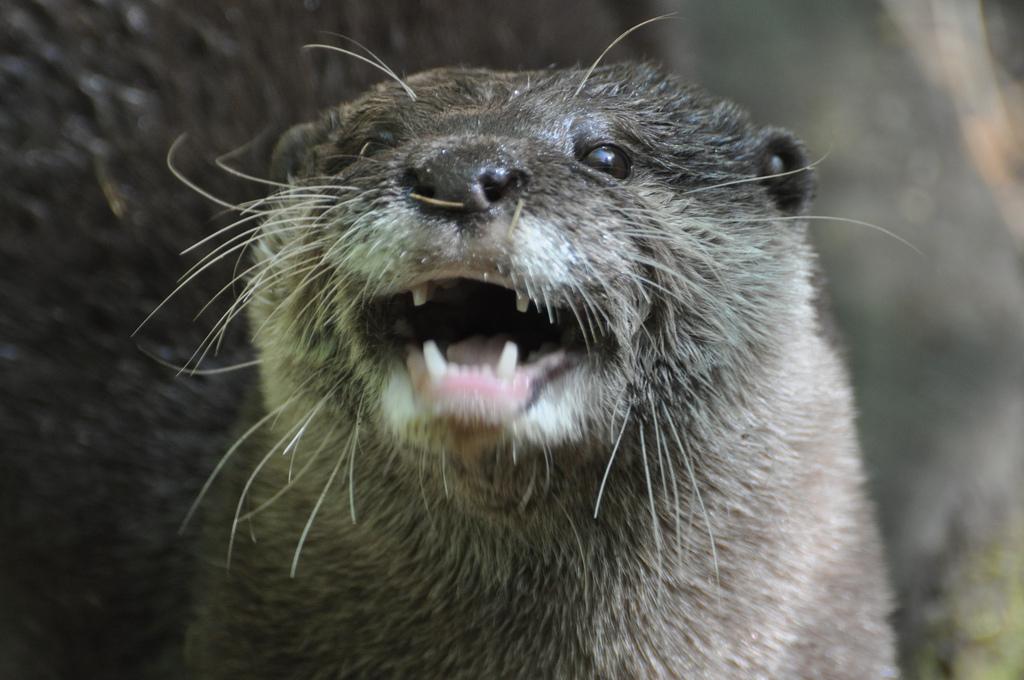 Otter LOLs