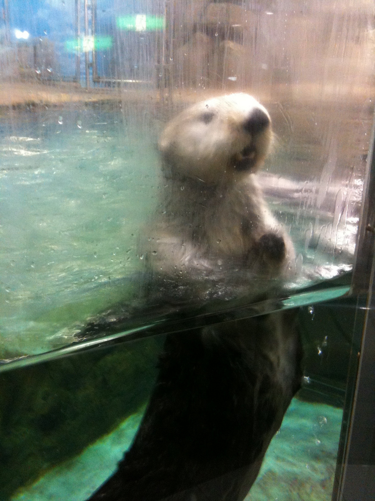 Want to Join Me for a Swim? The Water's Nice!