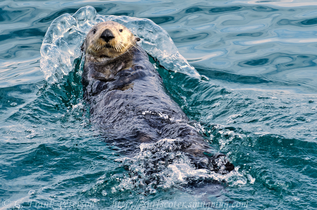 Otter Pushes Off