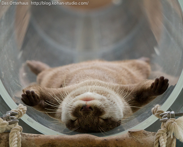 Otter Knows How to Relax 1