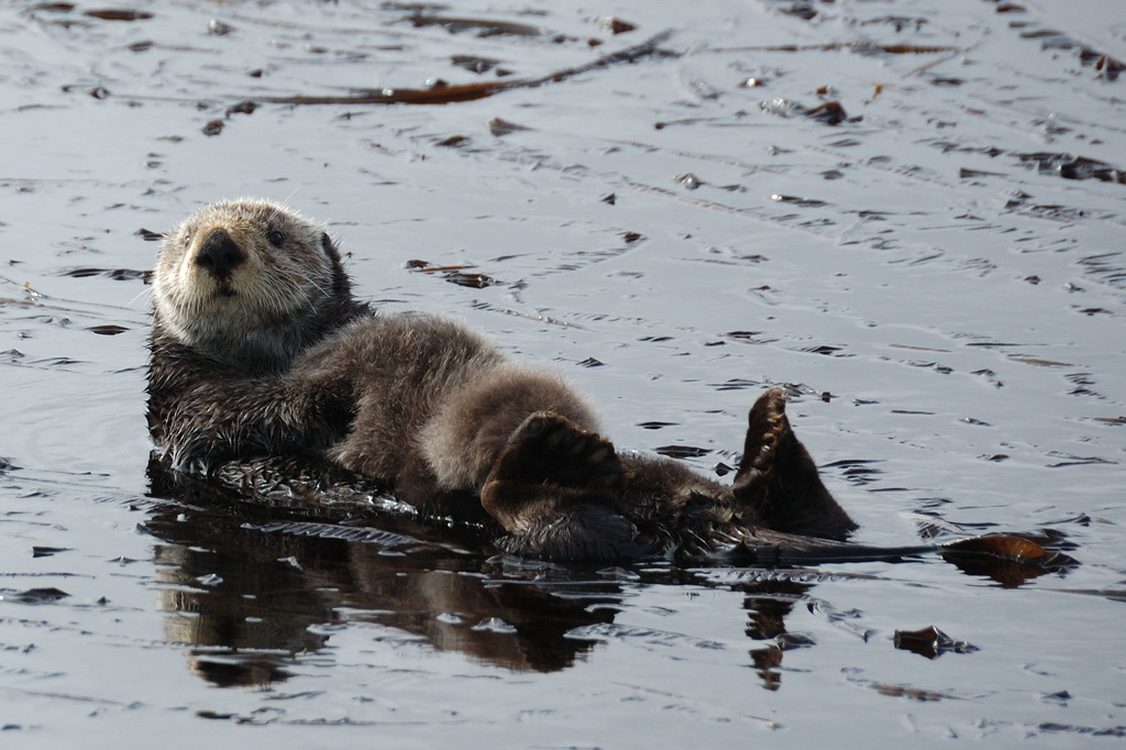 Mother and Baby Otters Float Along