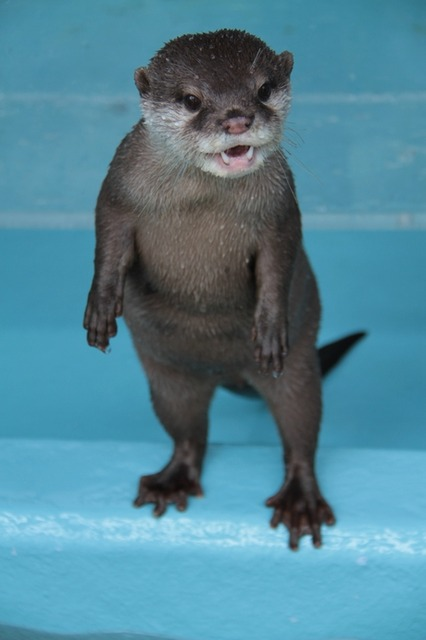 Otter Is Excited to See You!