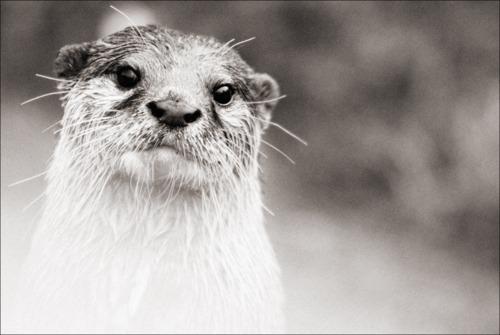 Lovely Otter Portrait