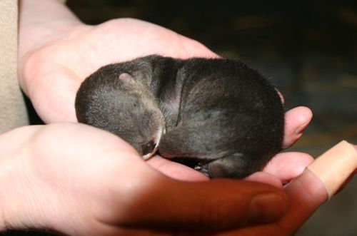 Ginger the Otter's First Litter of Pups 3