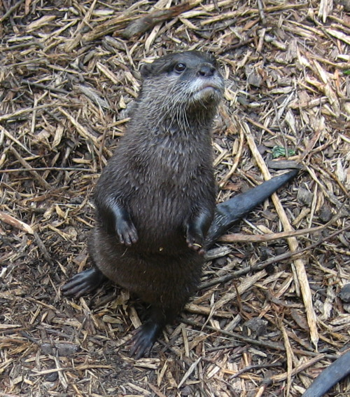 Otter Wants You to Come Down Here to Play