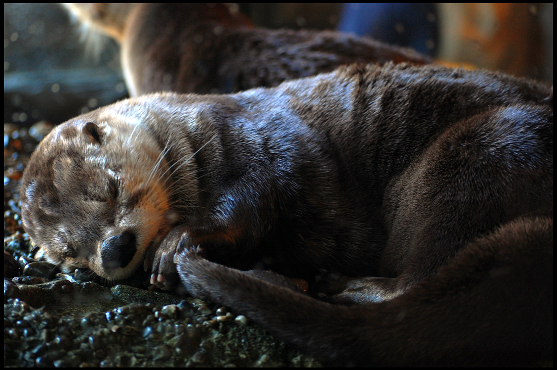 Otter Tail as Security Blanket