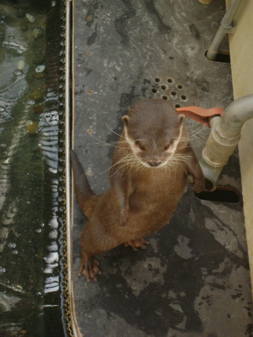 Aerial View of Otter