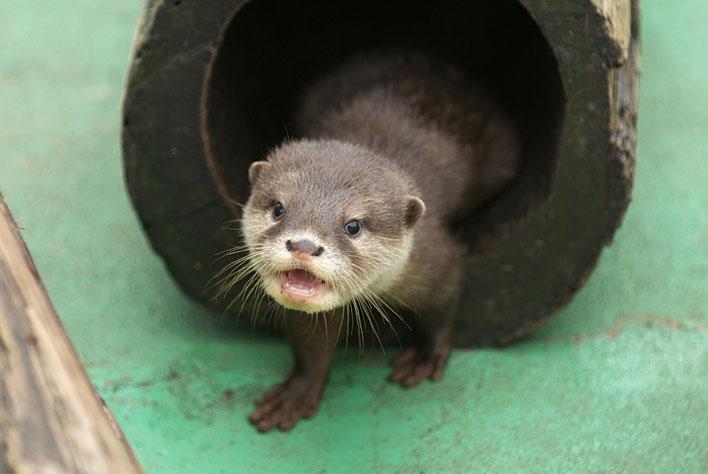 Otter Has a Very Cheery Hello!