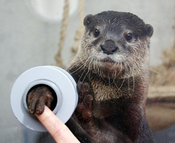 Otter Shakes Your Hand