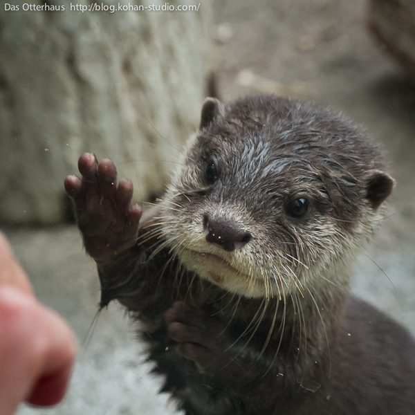 Warning: Do Not Tease the Otters! 1
