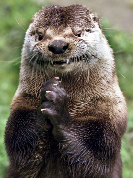 Sinister Otter Is Sinister