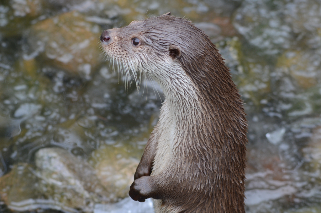 Well-Behaved Otter