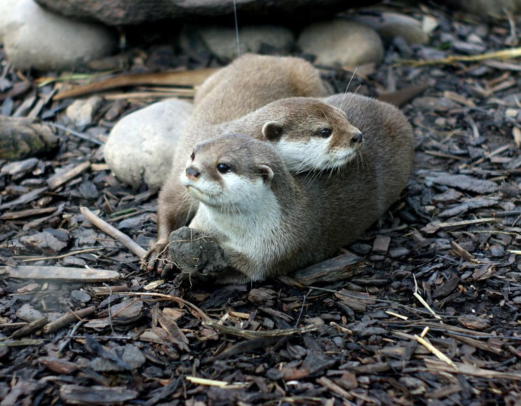 Otter Friends Relax
