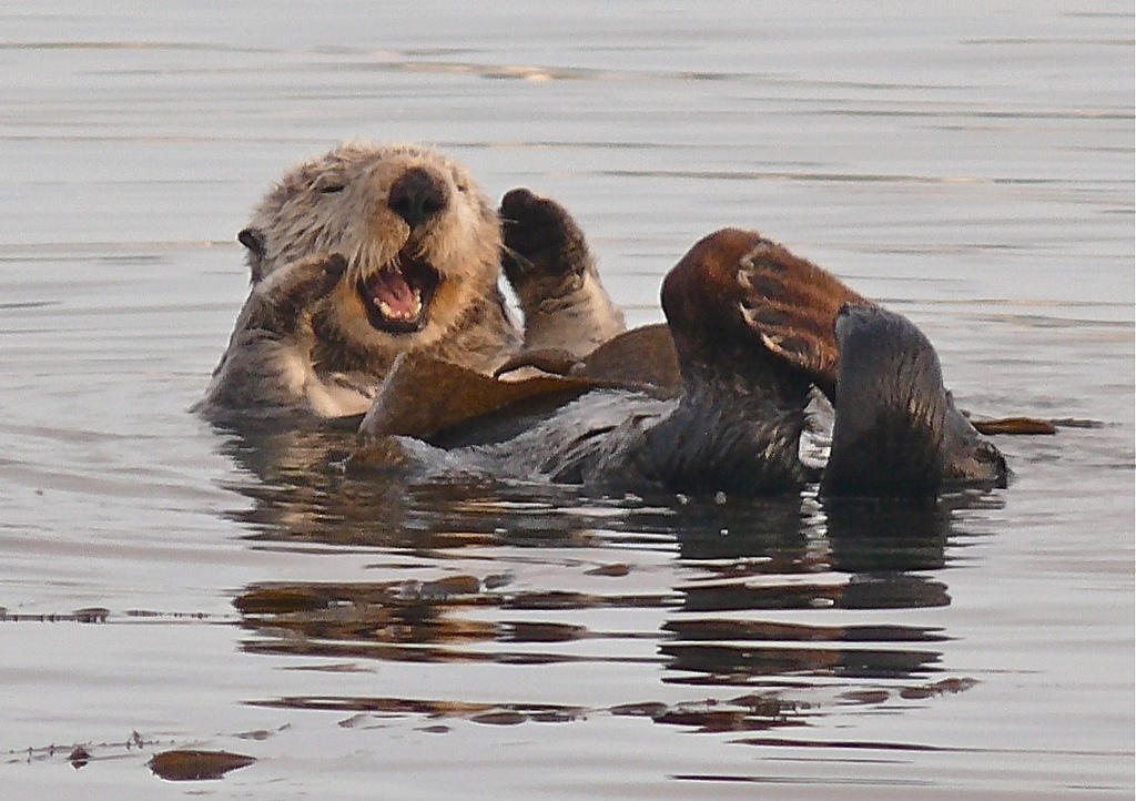 Otter Has a Laugh