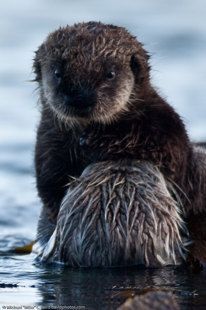 Mother Otter Holds Up Pup for the Camera