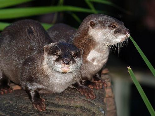 2009, 12-30 Daily Otter.jpg
