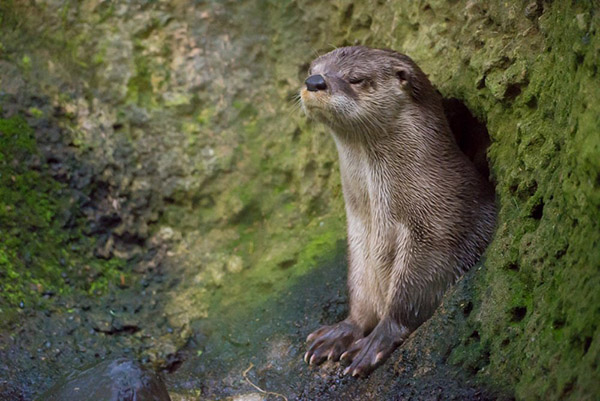 Otter May Be Up But He's Not That Happy About It