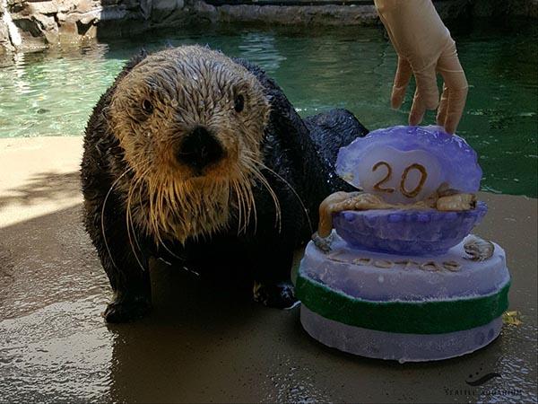 Happy Birthday, Lootas! 1