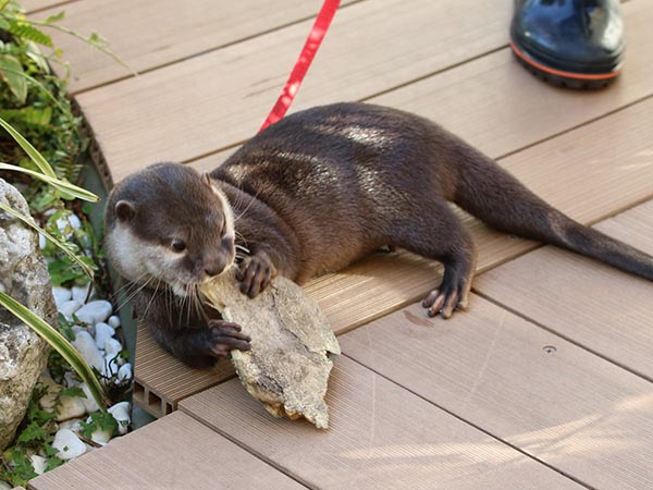 Otter, That Cannot Possibly Taste Very Good