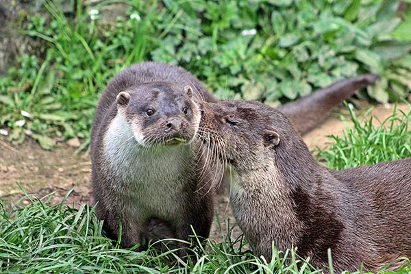 Otter Is Stunned by His Friend's Secret