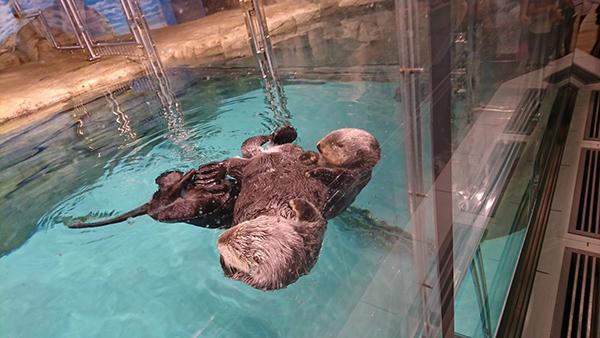 When Sea Otters Collide