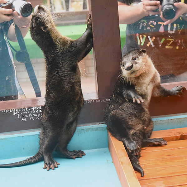 Model Otters Have at Least Two Poses Down