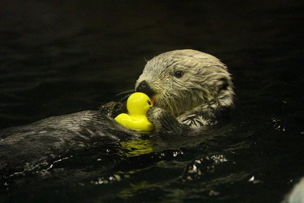 I Love You, Rubber Duck