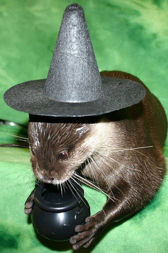It's the Daily Otter's Halloween 2017 Mega-Post! 3