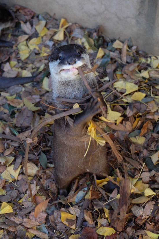 I Don't Know, Otter, That Doesn't Look Very Tasty to Me