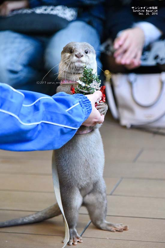 It's the Daily Otter's Christmas 2017 Mega-Post! 1